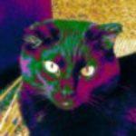 Profile picture of 0122