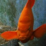 Profile picture of indigoiris